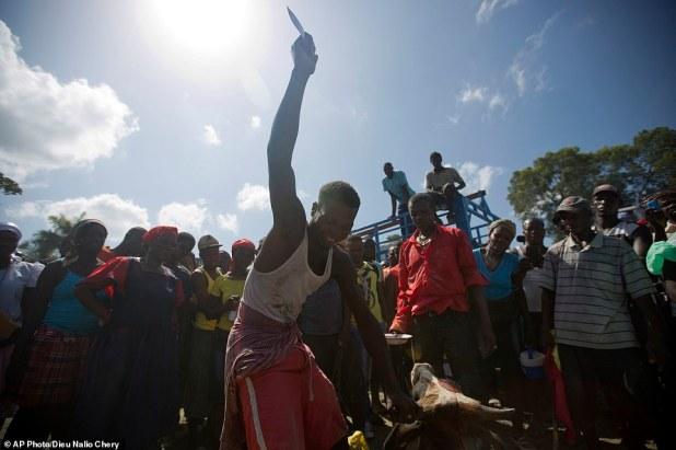A young man slaughters a bullock in a ritual sacrifice during an annual Voodoo celebration in Plaine-du-Nord, Haiti