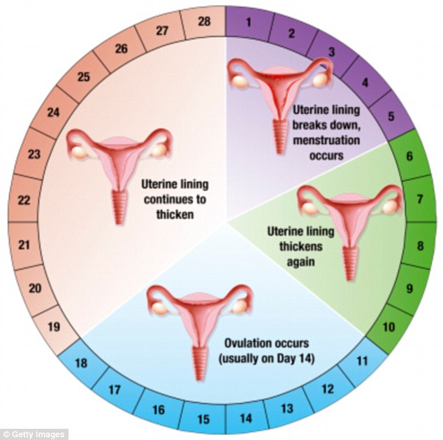 Female Reproductive System: A Brief Anatomy