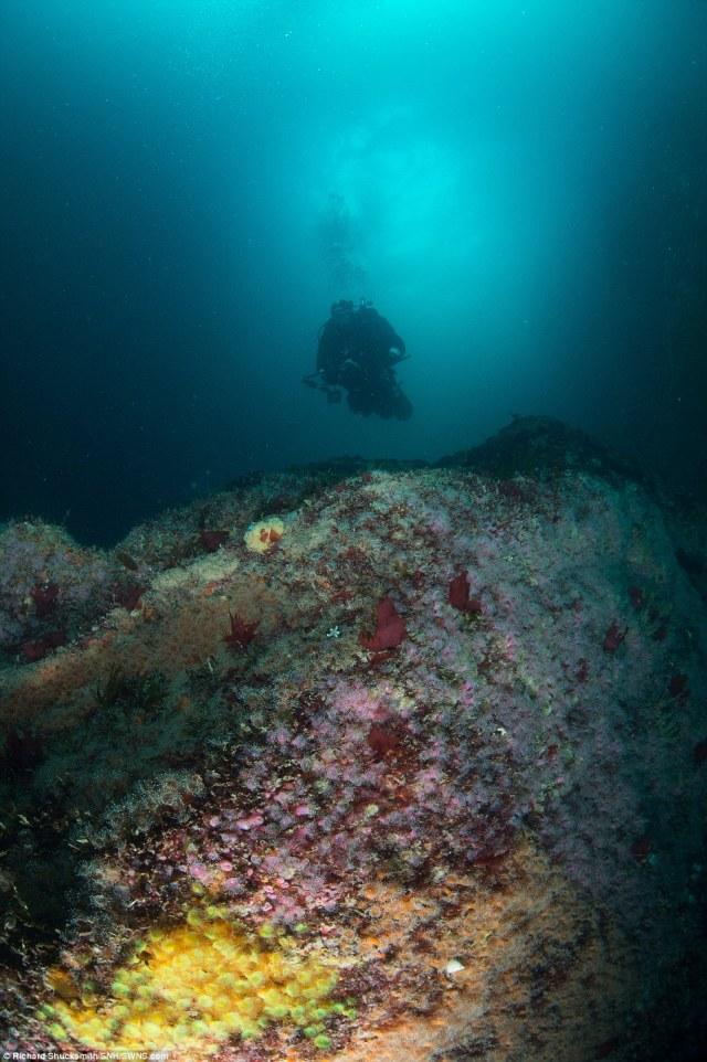 Phototgraphers e equipe de filmagem documentaram a rica envrionemnt marinha de sistemas de cavernas St Kildas, incluindo recifes incrustado com anêmonas coloridas jóia