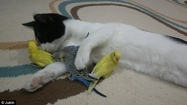 Image result for images- cat and birds