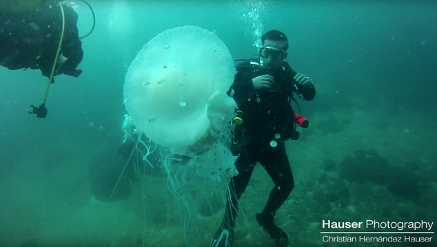 Viewers were quick to point out the dangers of coming so close to the creature, however the divers were suited up