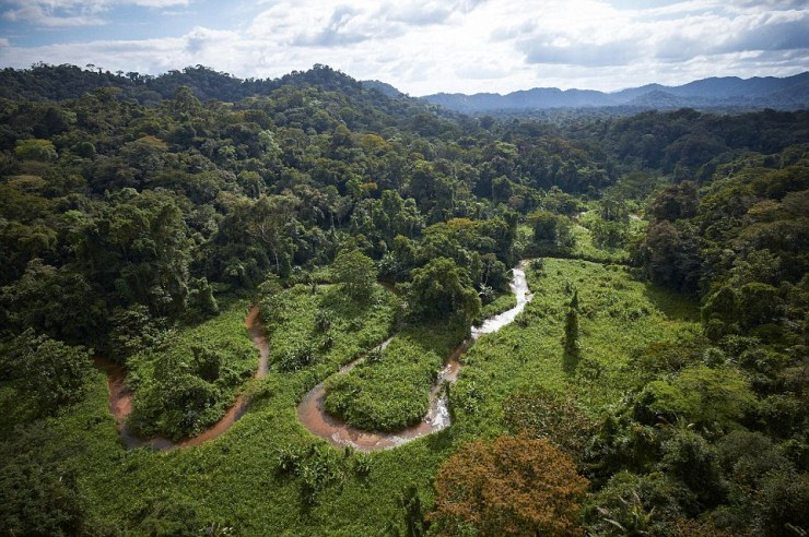 Lost: Somewhere in the valley of T1 (pictured), on the Honduran side of the Mosquitia rainforest, lies the lost 'City of the Monkey God', which was abandoned in the 16th century - but the dense foliage and mountains make it hard to explore