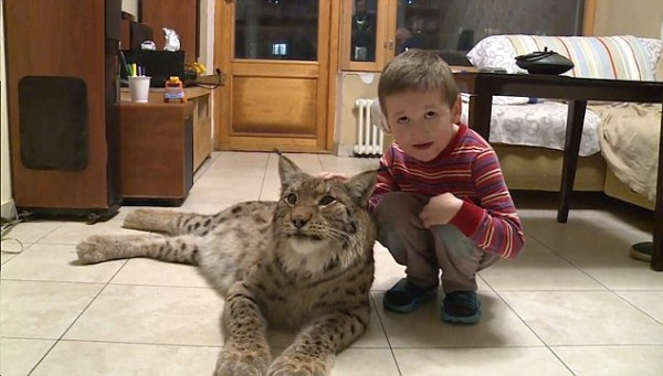 Russian father keeps a LYNX in his flat with son and is ...
