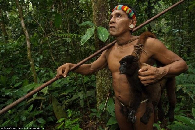 Ecuador es el hogar de 300 especies de monos, ninguno de los cuales están en peligro. Los monos comen la vegetación del bosque
