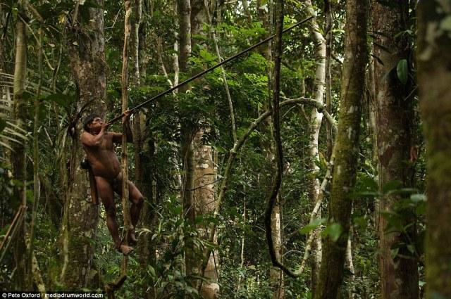 Un cazador espinillas Huaorani a un árbol y dispara un dardo soplete en un mono