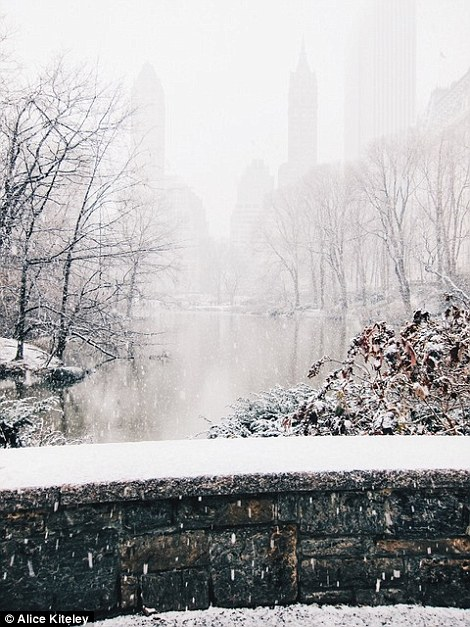 This snap of snowy Central Park in New York was shortlisted