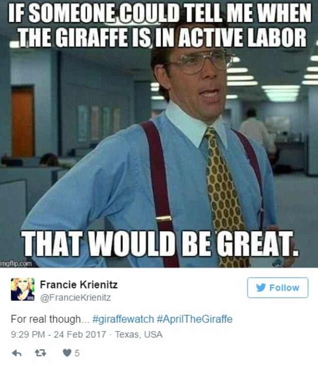 Image result for april giraffe meme active labor