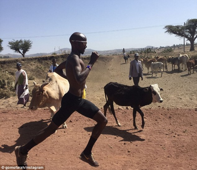 Mo Farah took to Instagram to post a photo of himself running alongside a herd of cows