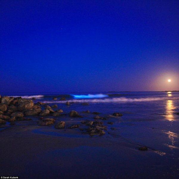 Stunning bioluminescence event lights up Tasmanian beaches ...