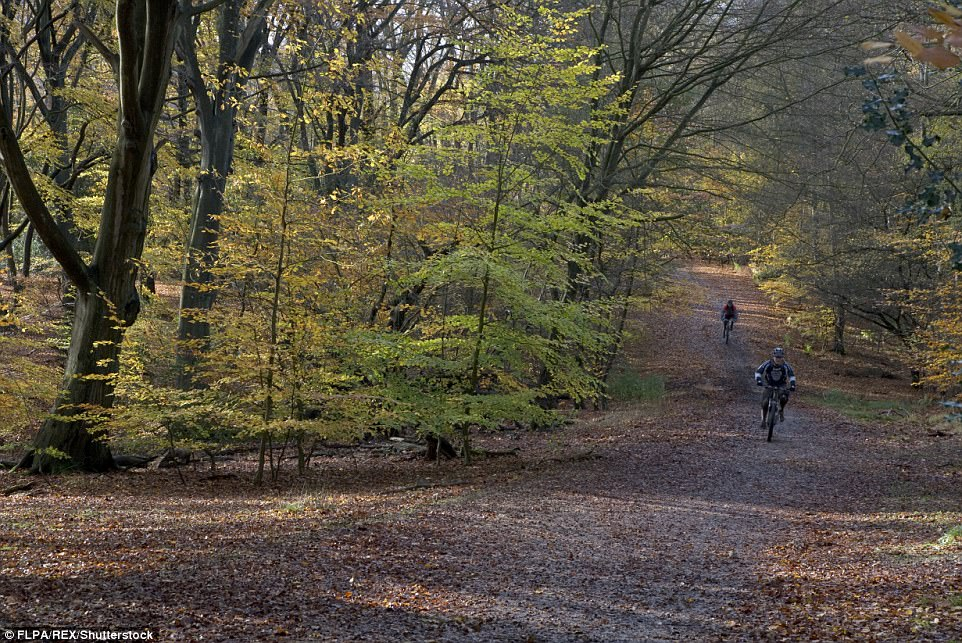 Muddy ride: Two enthusiastic cyclists brave the dangerous surface to ride along a bridleway in  Epping Forest, Essex