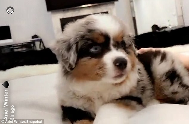 Inside dog:By the next video, Ariel and her latest household animal seemed to be home in bed, the dog clambering about near the actress' legs as she lounged