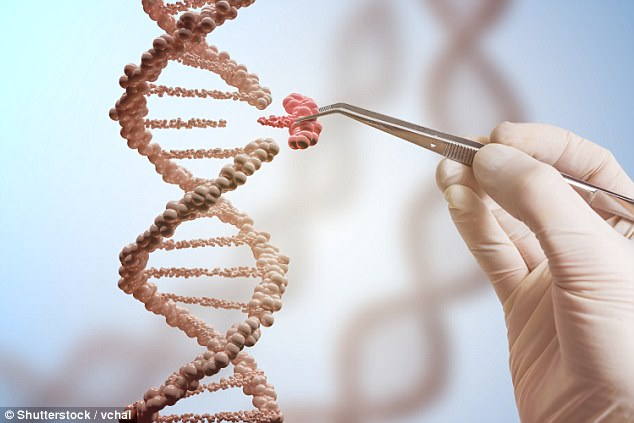 Scientists at the Lewis Katz School of Medicine at Temple University and the University of Pittsburgh completely removed HIV DNA from human cells implanted into mice (file image)