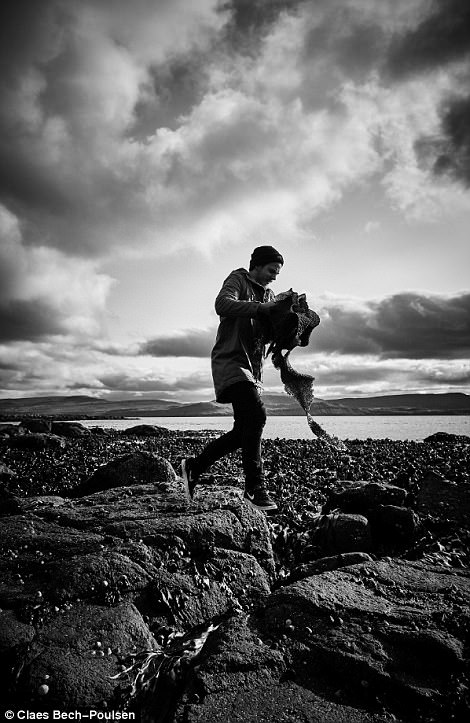 A chef forages seaweed from the Faroese coastline