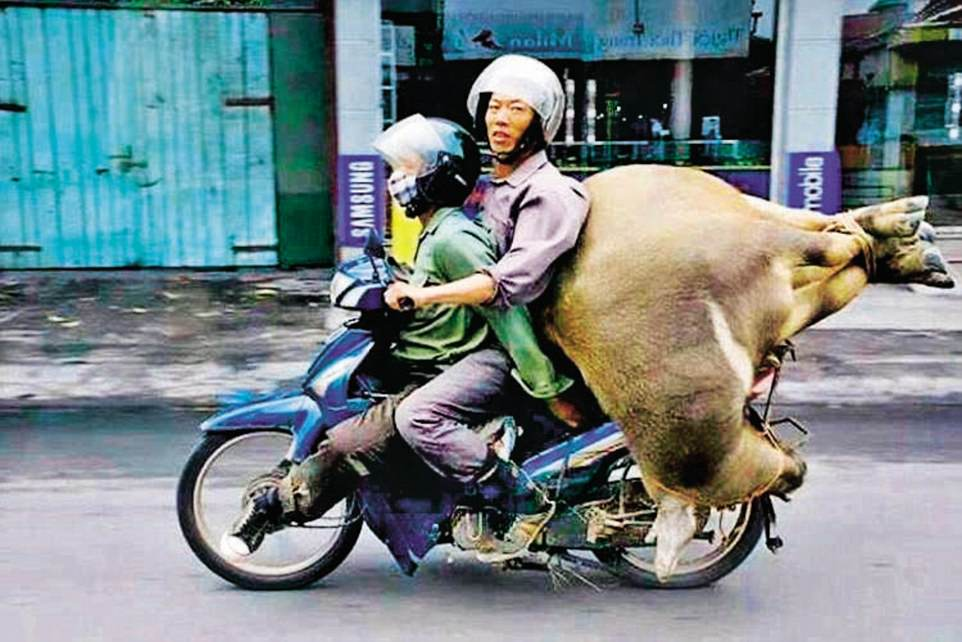 One guide showed Kieran a photograph of a man riding his Honda 90 with a live cow on the pillion