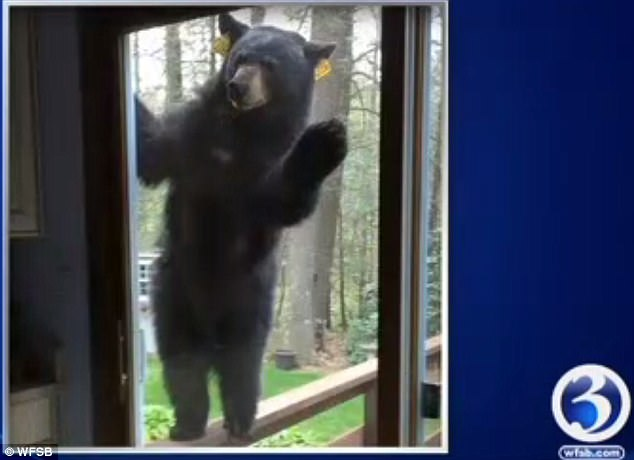 A couple from Connecticut were given quite a shock when they found a bear at their deck door