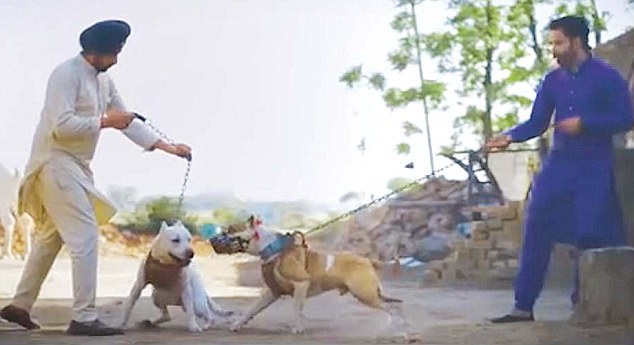 Diljit Dosanjh And Kamal Grewa Glorifying Dog Fighting