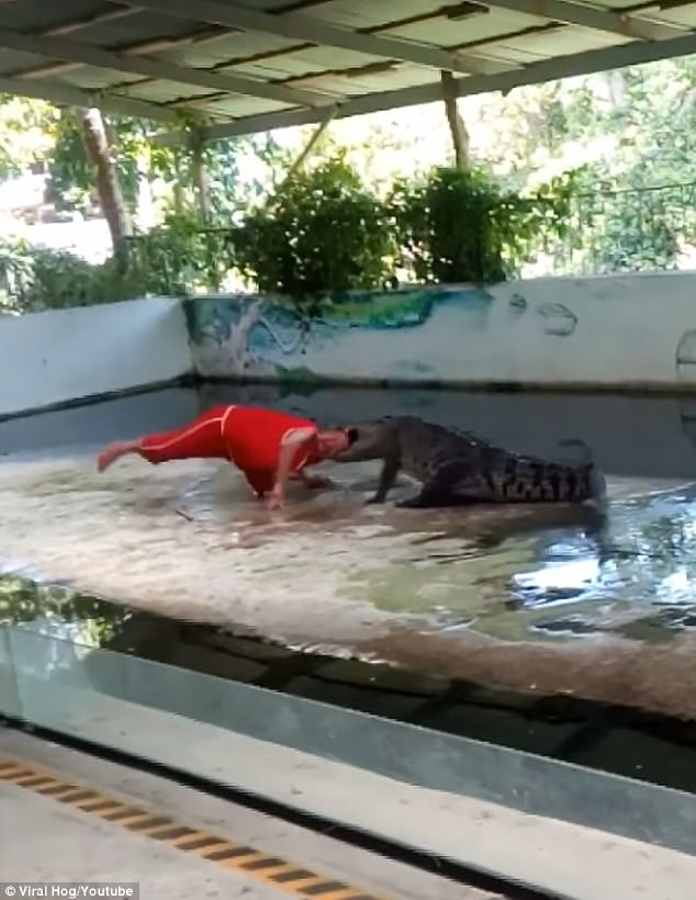 The crocodile violently thrashes the man from side to side while he screams in agony