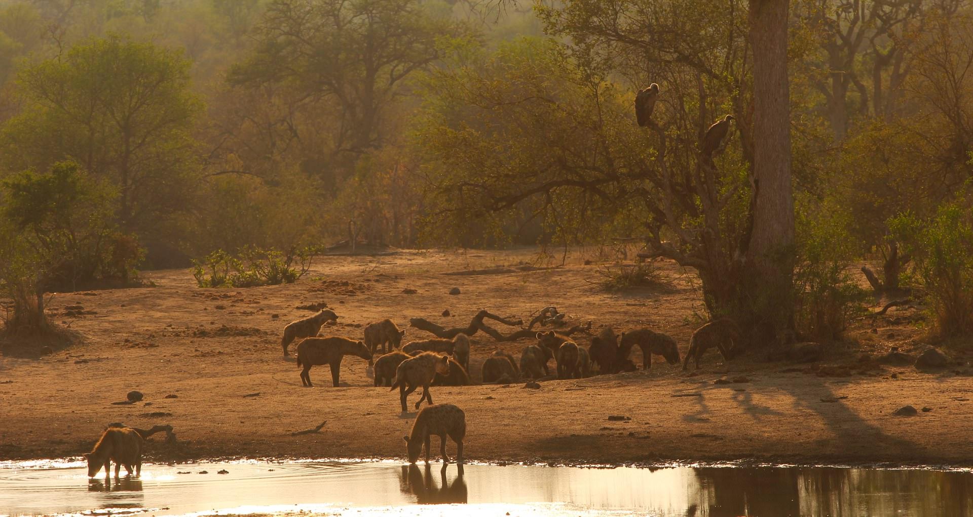 Tanda Tula, Kruger National Park