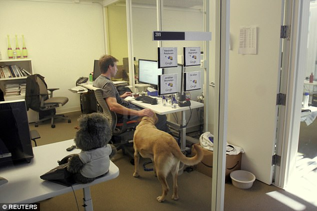 So long as they're supervised, staff can bring their four-legged friends to the office. Pictured: A happy mutt wagging its tail in Mountain View