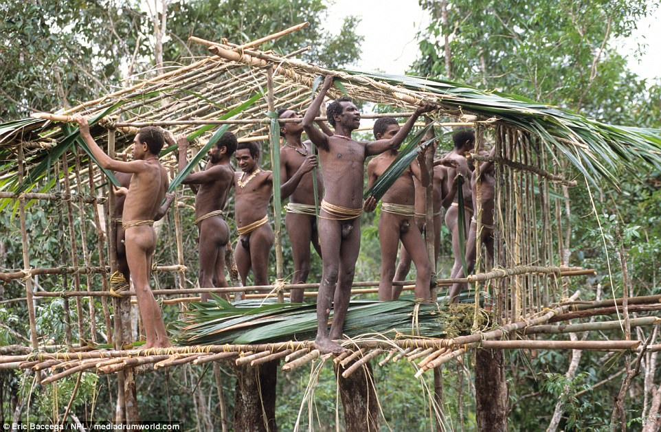 The Korowai men do not use helmets or other forms of safety equipment  when constructing their tree houses