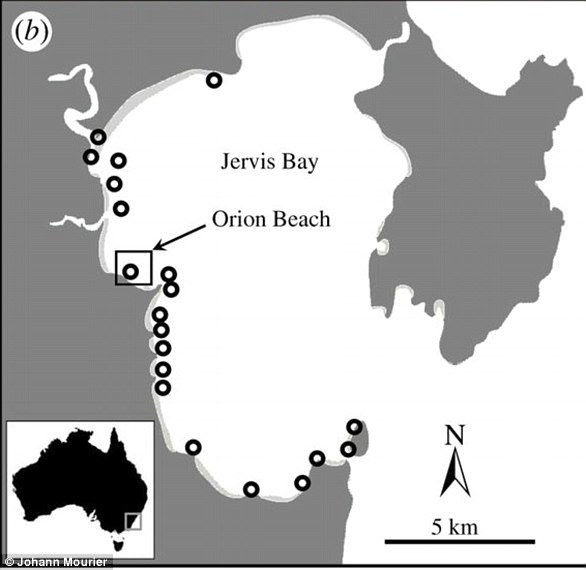 Locations of acoustic receivers deployed in Jervis Bay (NSW, Australia); each circle represents a receiver