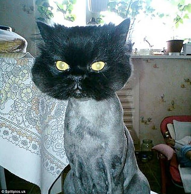 Pets That Have Been Subjected To Very Wacky Haircuts