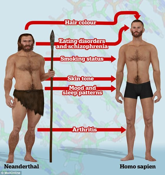 Scientists have found our Neanderthal inheritance affects our skin tone, hair colour, height, sleep patterns, mood, and even a person's smoking status. Previous studies have shown Neanderthal DNA affects our susceptibility to schizophrenia, arthritis and eating disorders