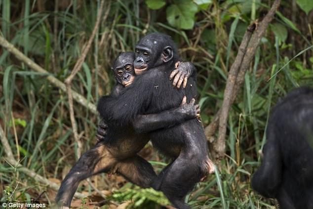 sense of morality in bonobo