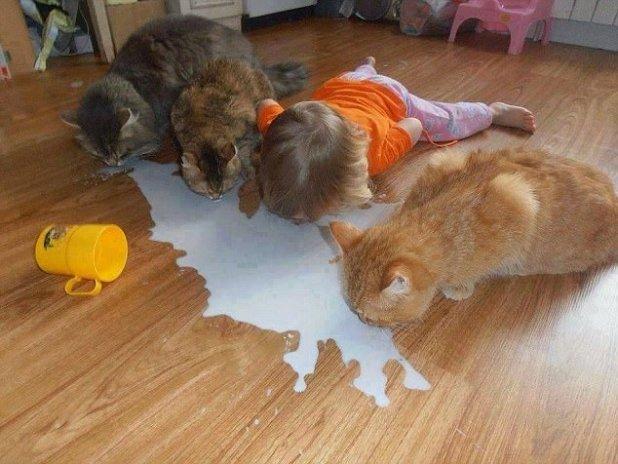 ¡No tiene sentido llorar sobre la leche derramada!  Solo sigue la pista de los gatos y colócala en su lugar