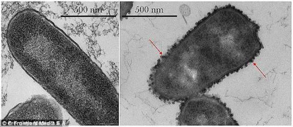 Risultati immagini per bacteria extraterrestrial, ISS