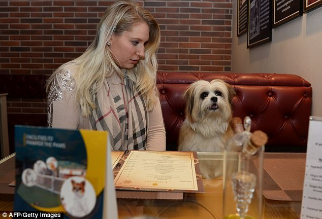 A dog cafe serves rice and chicken and the menu also features muffins, pancakes and ice-cream. Pictured is Katriina Bahri with her dog Biloo inside the hotel's cafe