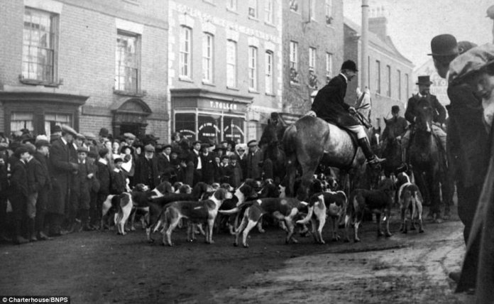 First meet of Sir John Amory's staghounds at Wellington, pictured on February 15, 1911. A large crowd has gathered to see off the huntsmen and their beagles