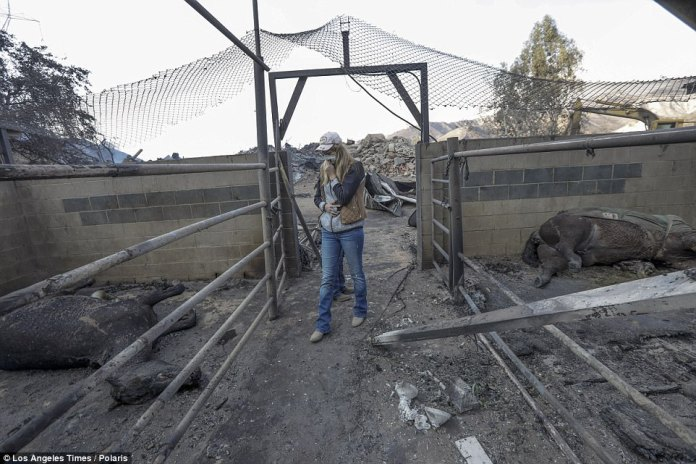 Shelby Hope walks through the remains of the Padilla Ranch near Sylmar, which was ravaged by the Creek Fire. The ranch owners were forced to flee for their lives, and were unable to free their horses - 29 of which perished
