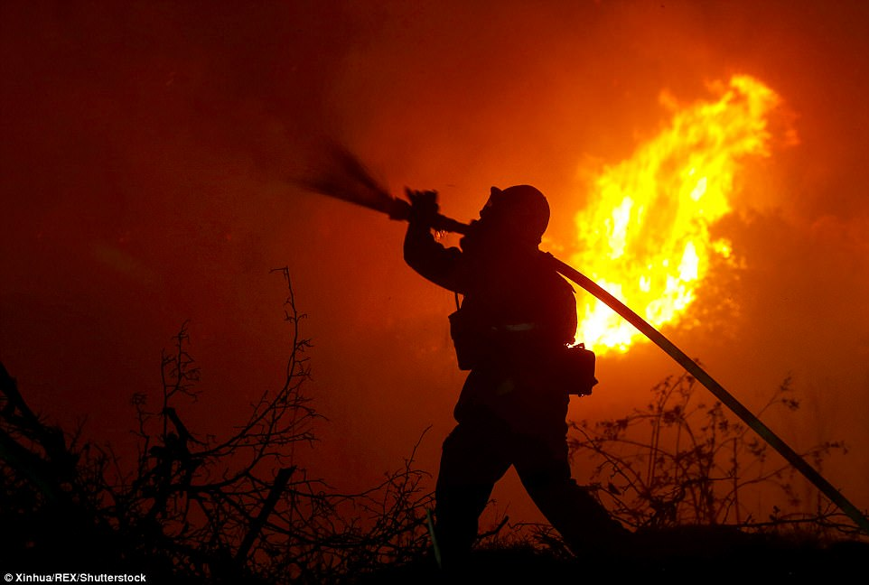 A firefighter battles a wildfire in Santa Paula, Ventura. The fast moving brush fire has ripped through the state during the past week