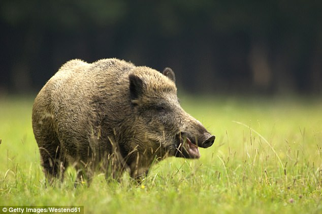Accident: A 59-year-old man was shot dead by a hunter near the village of Taulignan, Drome department, after the 64-year-old mistook him  for a wild boar