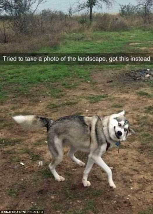 This dog manages to pull off a rather impressive photo bomb as his owner tried to take a photo of the surrounding landscape