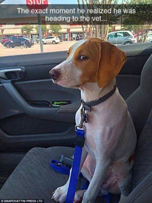 One unhappy pet looks rather suspicious of why his owner has put him in the car, only to realise what he days activities are going to bring