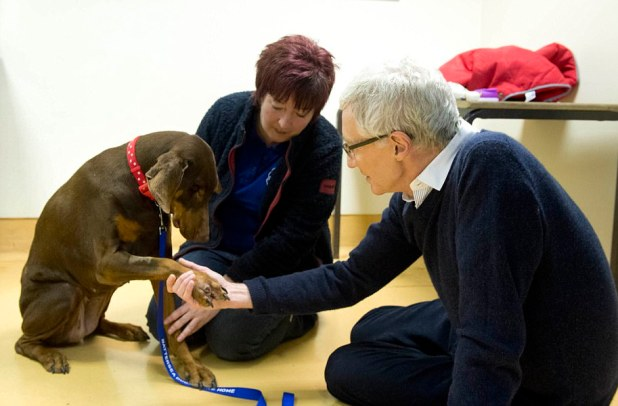 The work of Battersea Canines and Cats House aspects closely within the ITV prove Paul O'Grady: For the Adore of Canines