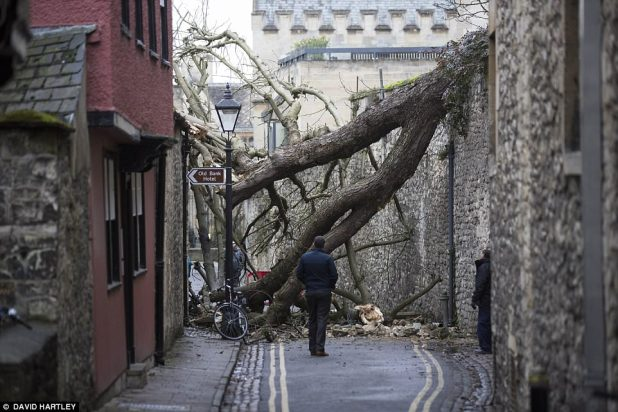 A fallen tree from the grounds of Oriel College, in Oxford, which crashed into Magpie Lane, which outcomes in the Excessive Boulevard