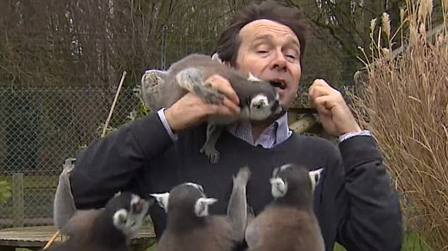 The video, shared on Twitter, shows the BBC Look East reporter's struggle with the aggressive primates