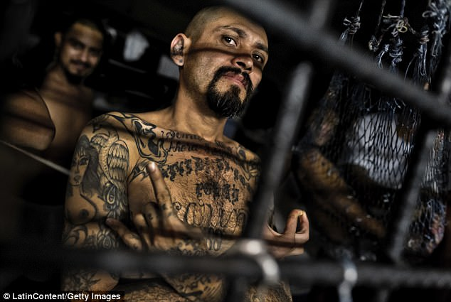 A major crackdown on MS-13 (pictured) confirms the gang's tentacles have infiltrated Australia