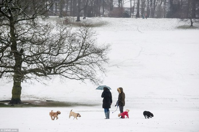 People brave the cold weather and take their dogs out for a walk in fields atWarley Woods, Birmingham