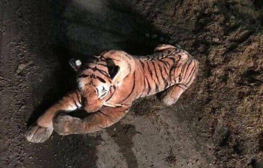 Los agentes de policía se apresuraron a la granja en Hatton, Aberdeenshire, y más tarde descubrieron que el tigre era solo un peluche