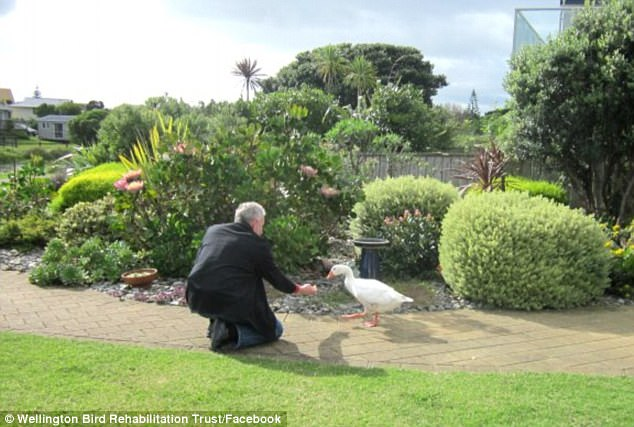 An aging Thomas is fed by a staff member at the trust as he potters around the garden