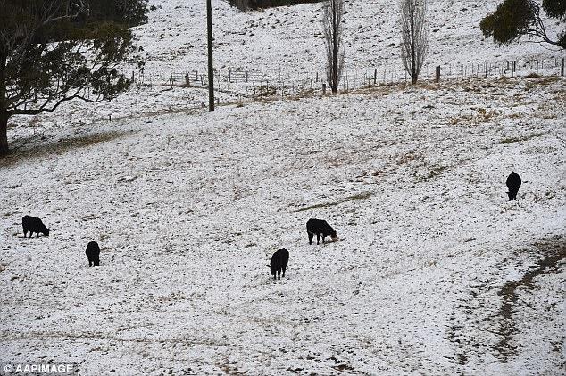 """O Bureau of Meteorology lançará suas """"perspectivas para o inverno no final de maio"""""""