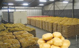 Image result for potato export