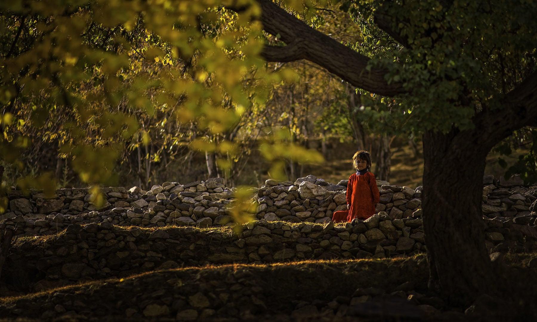 Under the tree.