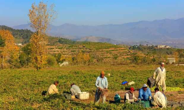 خوازہ خیلہ میں کھیتوں میں کام جاری ہے. — فوٹو سید مہدی بخاری۔