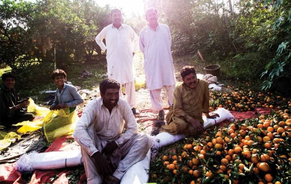 Citrus fruit pickers in Bhalwal