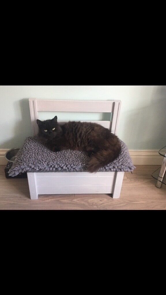 Wooden Cat Small Dog Bed Bench In Barnsley South Yorkshire Gumtree